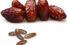 Date-Seed-9