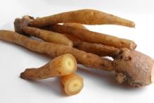 Fingerroot-rhizome-Khchiey