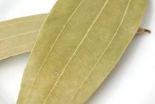 Indian-Bay-Leaf--Kanelilaakeri