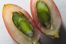 Half-cut-Miracle-Fruit