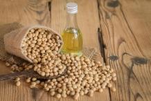 Soybean-oil-Glycine hispida