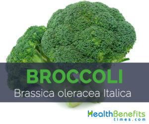 Broccoli - Brassica oleracea Italica