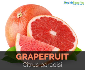 grapefruit-citrus-paradisi