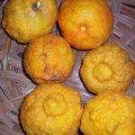 Rough-lemon