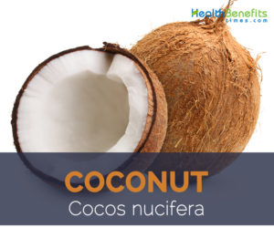 Coconut facts and health benefits