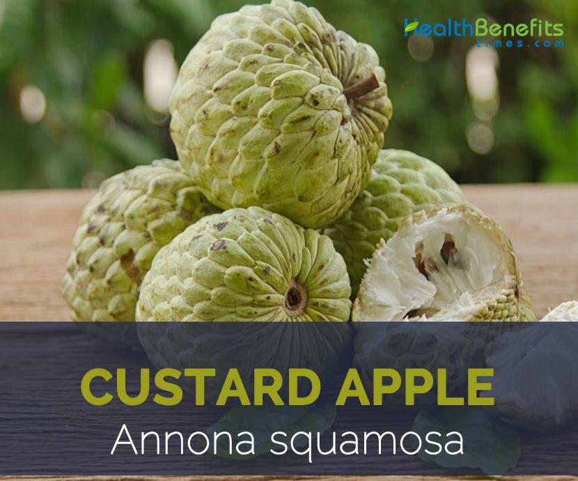 7 Health Benefits of Custard Apples images