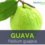 guava-facts-and-health-benefits