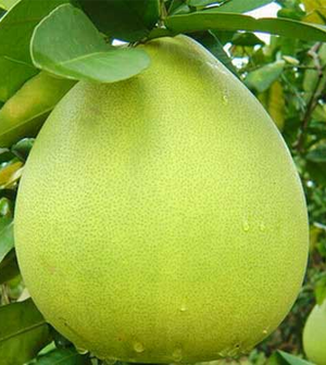 Health care benefits of Pomelos