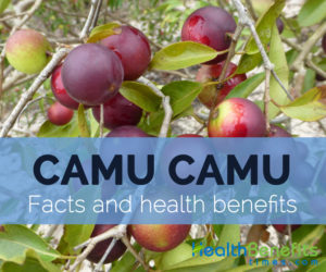 Camu-camu-facts-and-health-benefits