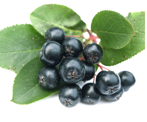 Health benefits of Aronia Berry