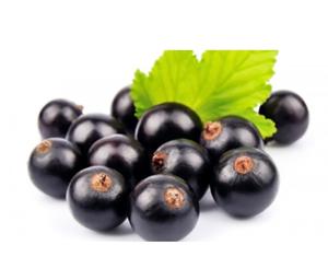 Health benefits of Maqui berry