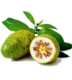 Health benefits of noni fruit