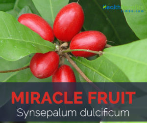 Miracle fruit facts and health benefits