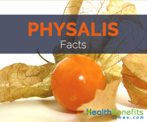 Physalis Facts and Health benefits