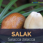 Salak fruit facts and health benefits