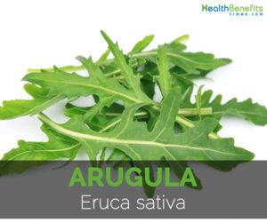 Arugula-Eruca-sativa