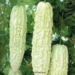 Bitter Gourd, India Long White