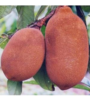 Health benefits of Nopal fruit