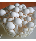 Health-benefits-of-Mushroom