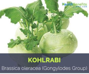 Kohlrabi - Brassica oleracea (Gongylodes Group)