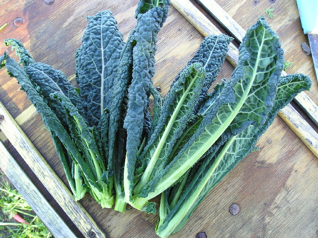 how to clean off aphids kale