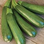Zucchini 'Burpee's Fordhook'