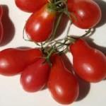 Austin's Red Pear Tomato