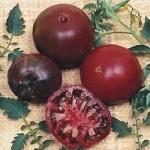 Black Velvet Tomato