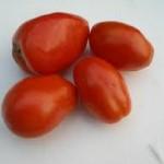 Debaro Tomato