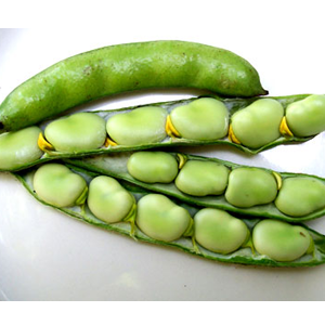 Health-benefits-of-Broad-Beans