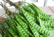 Health benefits of Petai