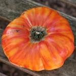 Hillbilly Tomato