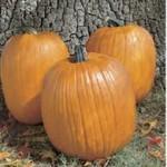 Howden Biggie Pumpkin