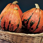 Lakota Pumpkin