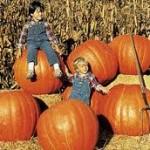 Prizewinner Pumpkin