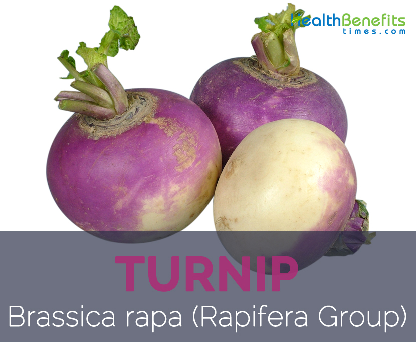 Turnip facts and health benefits