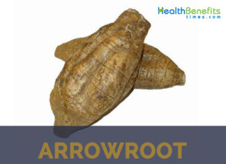 Arrowroot facts and health benefits