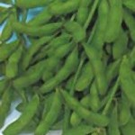 Edamame, Late Giant Black Seeded