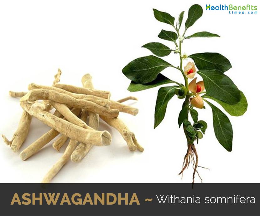 Health-benefits-of-Ashwagandha