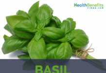 Basil facts and health benefits