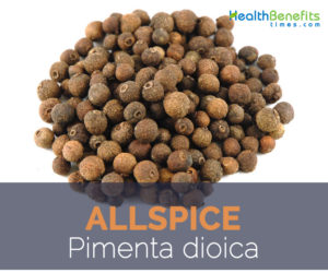 Allspice facts and health benefits