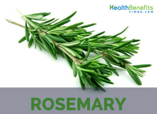 Rosemary facts and health benefits