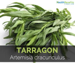 tarragon-artemisia-dracunculus