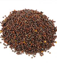 Health Benefits of Mustard Seeds