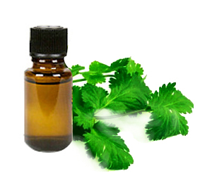 Health Benefits of Coriander Essential Oil