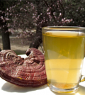 Health Benefits of Reishi Mushroom Tea