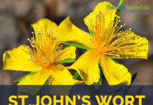 St. John's Wort facts and health benefits