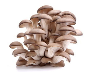 Health Benefits Of Oyster Mushroom