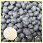 Black Pearl Soybean