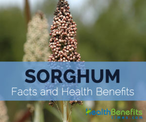Sorghum-facts-and-health-benefits